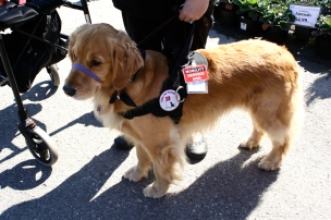 Service Animals and Veterans